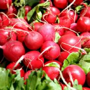 Radish Cherry Belle - Appx 150 Seeds